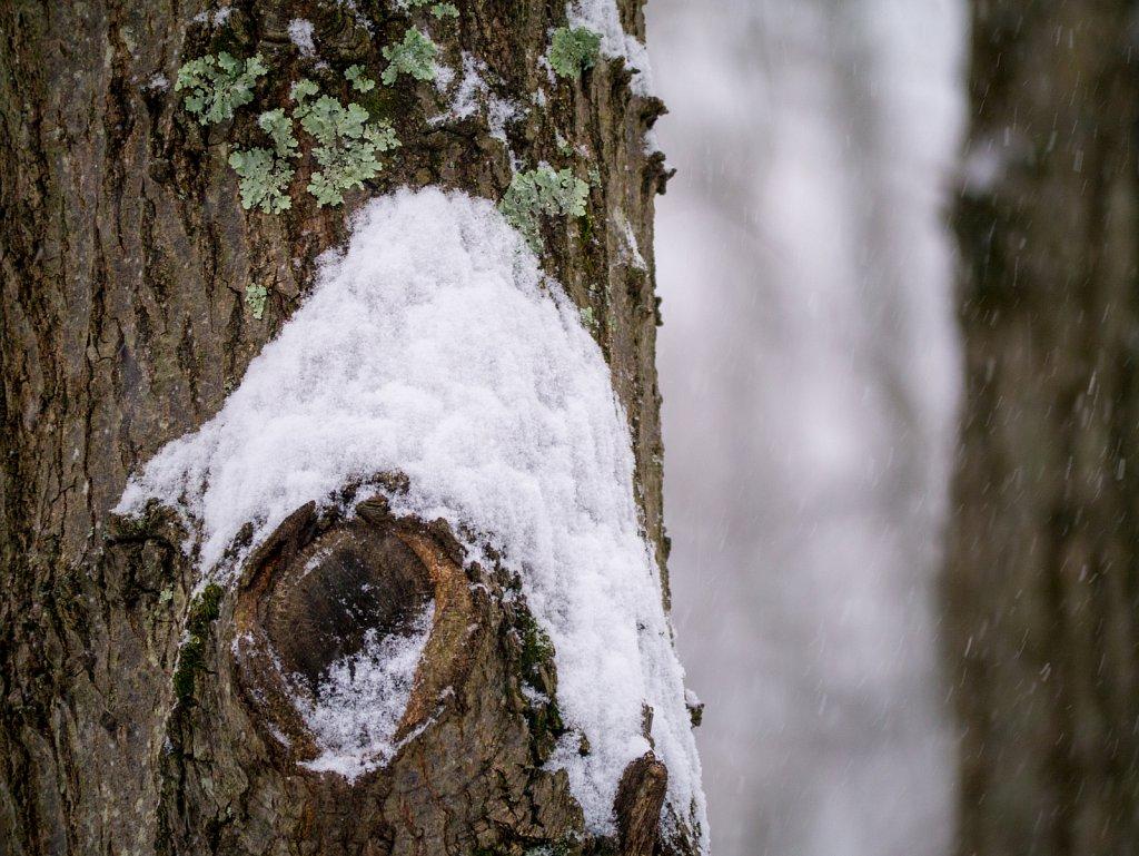Knot Snowy